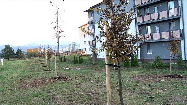Stromy majú chrániť ľudí pred hlukom a prachom