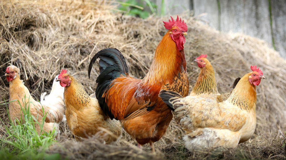 Banskobystrický kraj vyzval farmárov, aby sa stali dodávateľmi lokálnych potravín pre jeho zariadenia